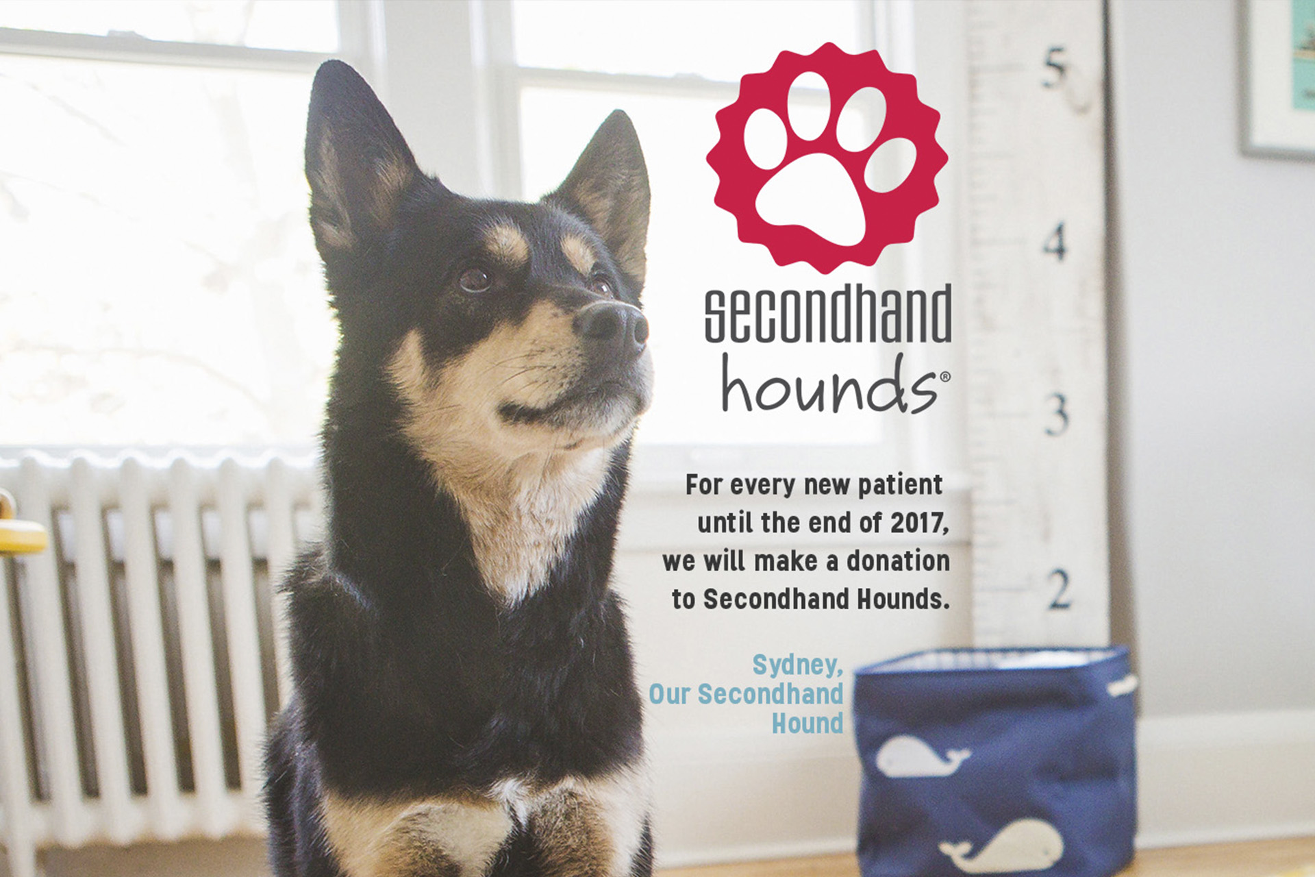 For every new patient until the end of the 2017, we will make a donation to Secondhand Hounds.