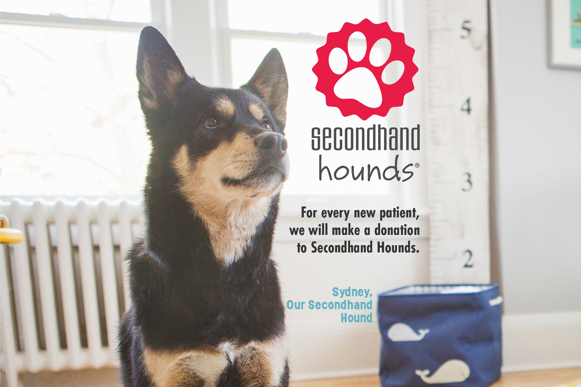 For every new patient, Loop Dental will make a donation to Secondhand Hounds.